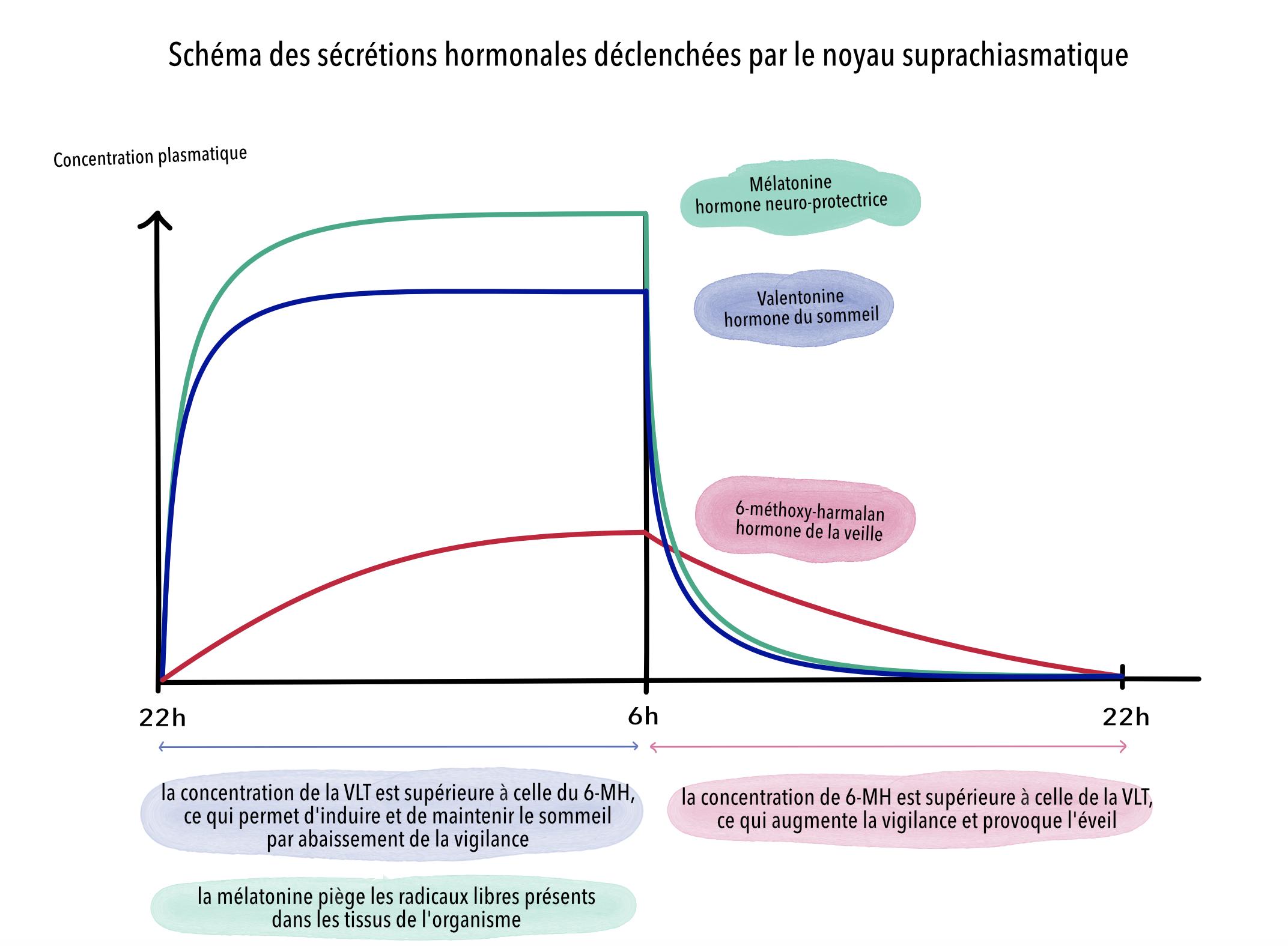 secretions-hormonales