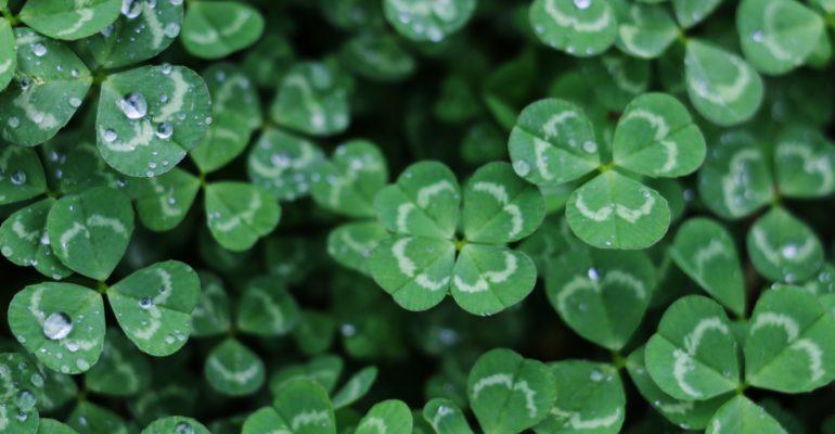 Eloge de la chance et de l'optimisme