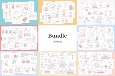 Bundle illustrations anatomie-physiologie